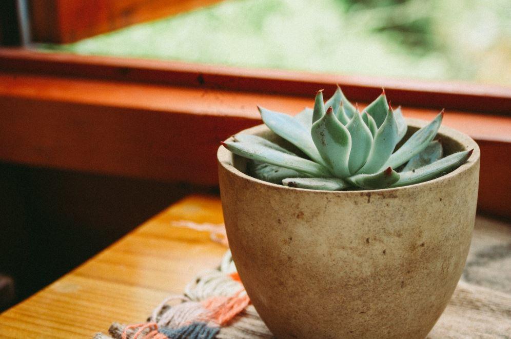 Potter og planter skaber atmosfære og giver et godt indeklima i dit orangeri.